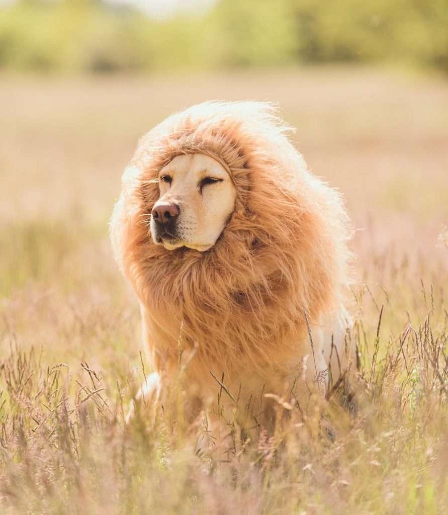 Hundekostüm Löwe