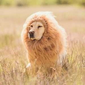Amazon - Kostüm selber machen - Hundekostüm Löwe Löwenmähne