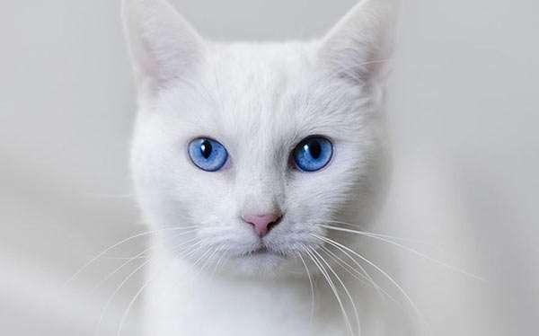 Weiße Katze Kostüm selber machen