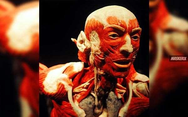 Anatomie Kostüm selber machen
