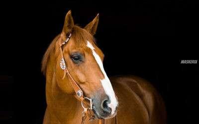 Pferde Kindergeburtstag » Ideen & Tipps für Pferdeliebhaber